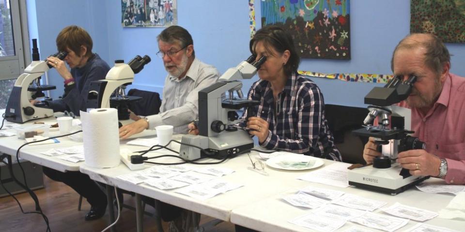 Testing for Nosema disease