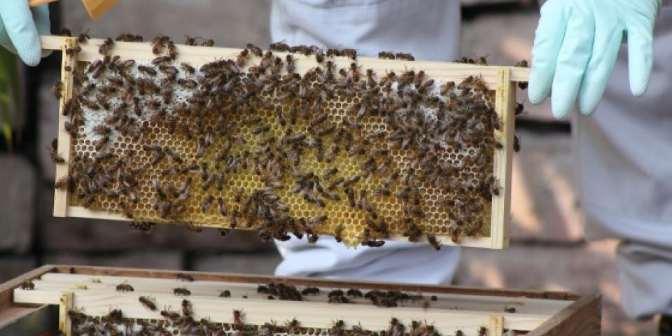 Stores of honey