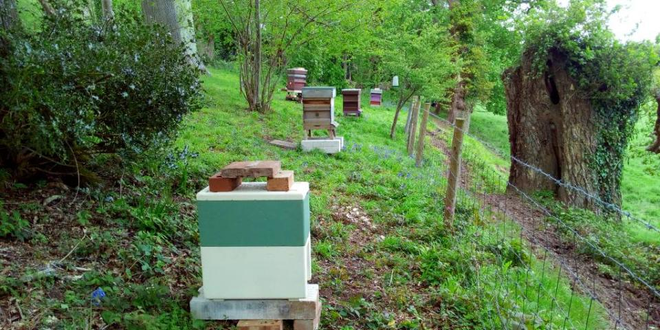Swarm prevention - queen in poly nuc hive