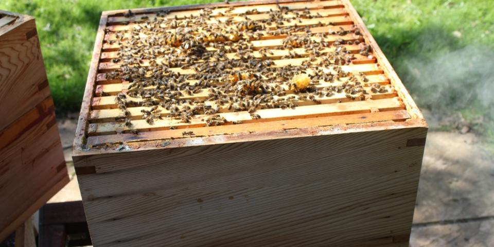 First inspection of brood box this year