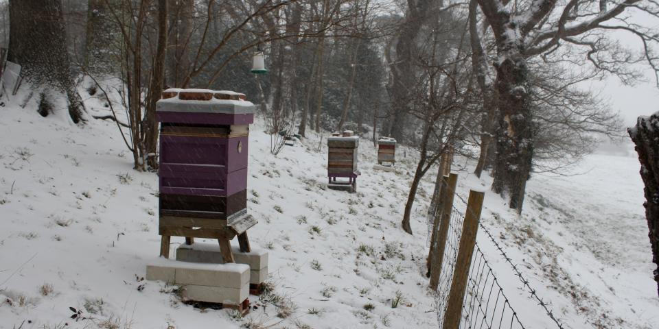 Snow at the apiary