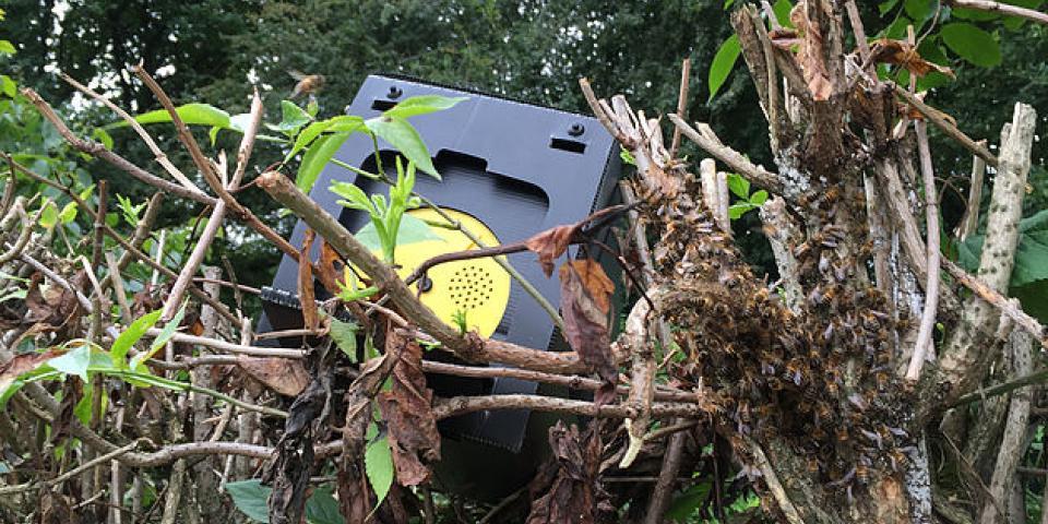 Josh Akhtar's bait hive