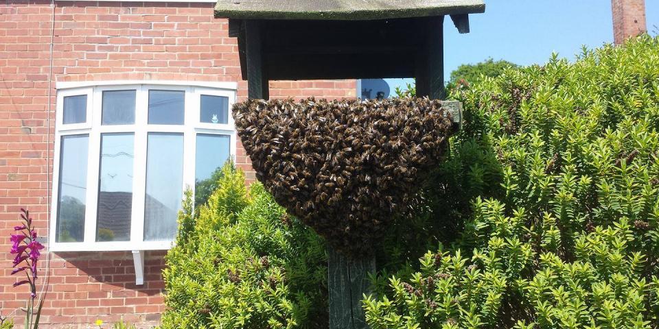 Cast swarm