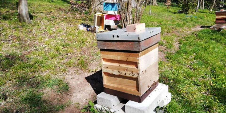 Nuc potted on into National hive
