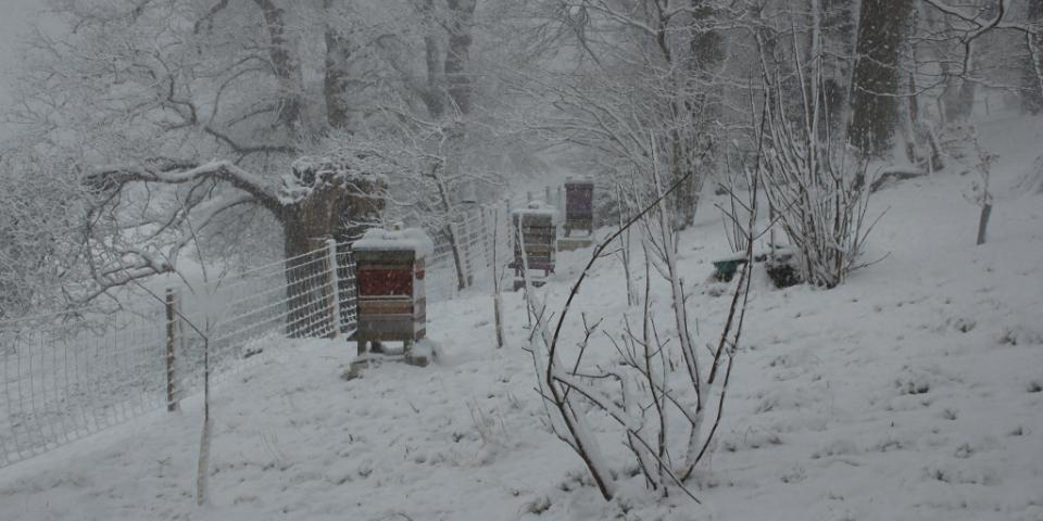 Apiary in the snow