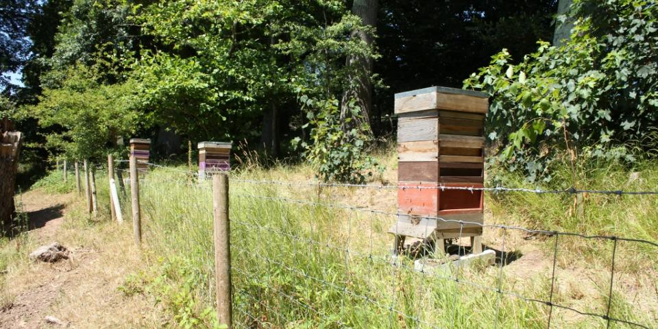 Apiary showing stacked supers