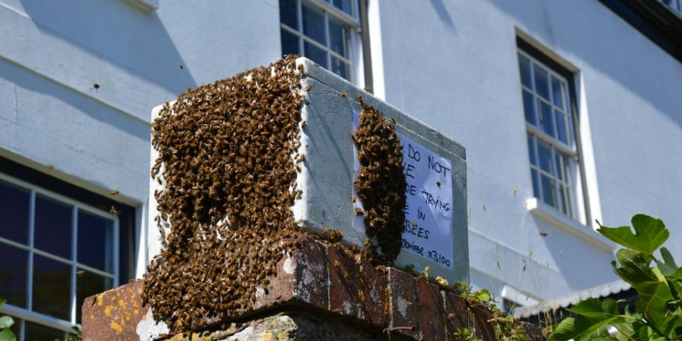 Swarm lured from roof space