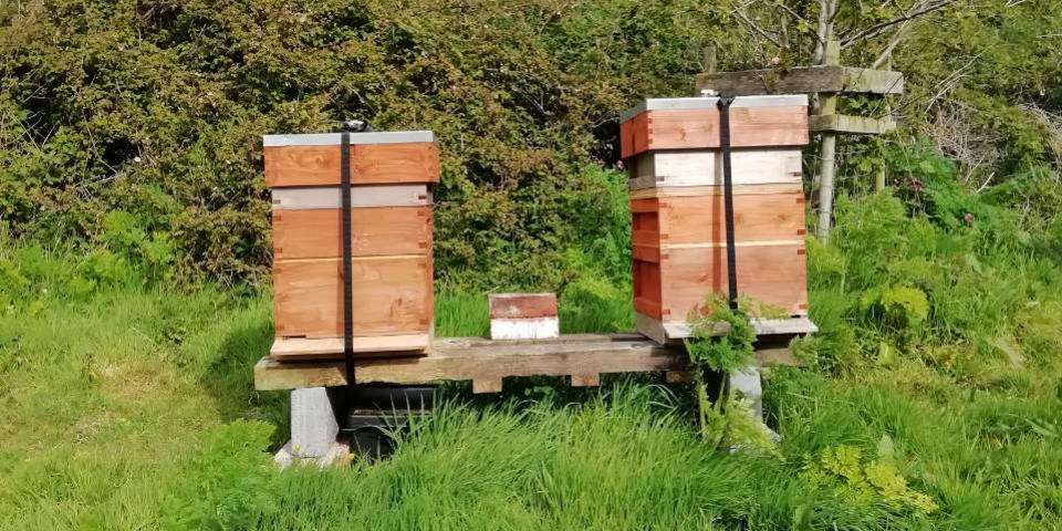 Two beehives on a hive stand
