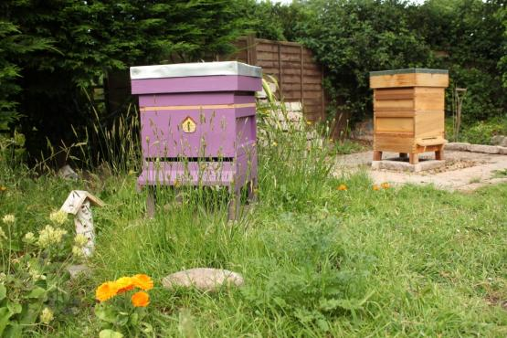 Newly painted beehive in garden
