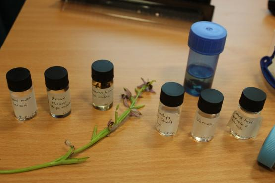 Samples of exotic pests and other pests