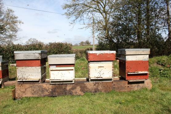 National beehives